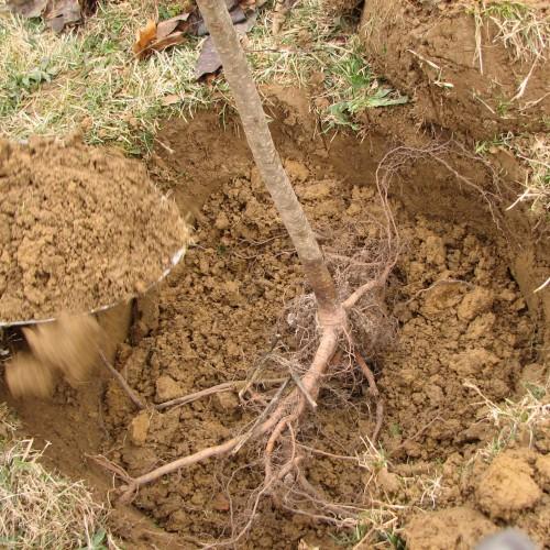 Οδηγίες για τη φύτευση δένδρων