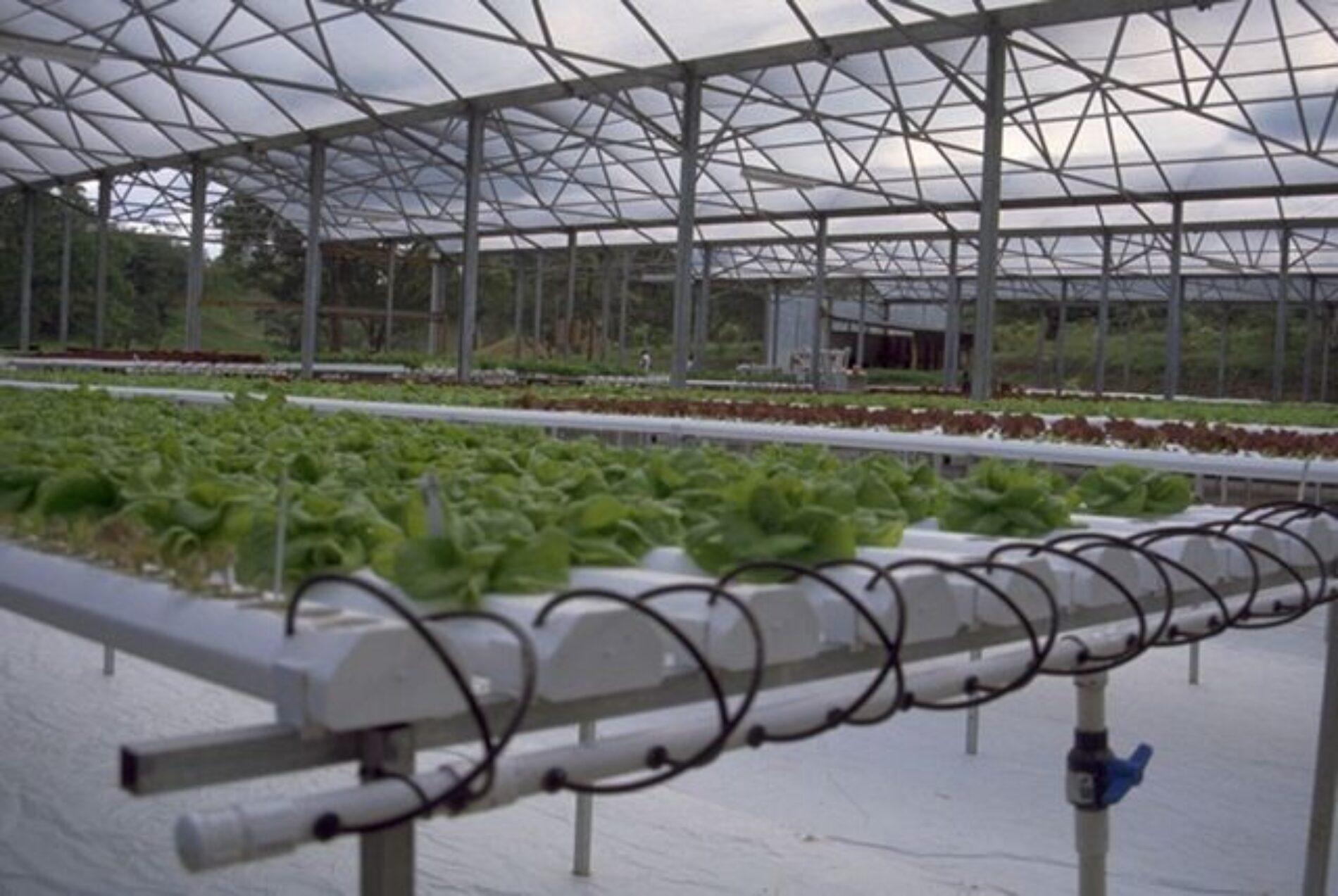 Διαφορές μεταξύ παραδοσιακής και υδροπονικής καλλιέργειας