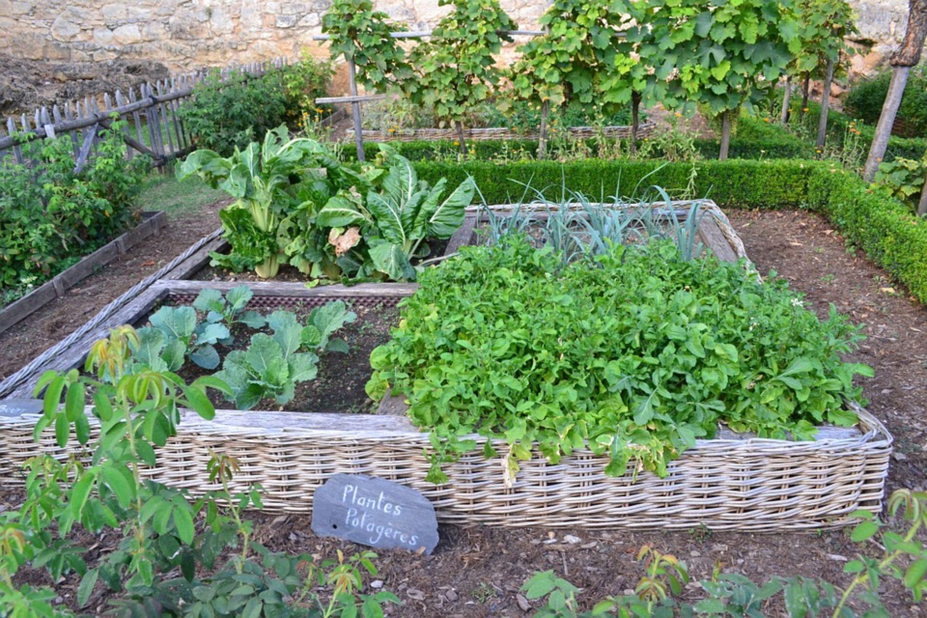 Φτιάξτε το δικό σας λαχανόκηπο