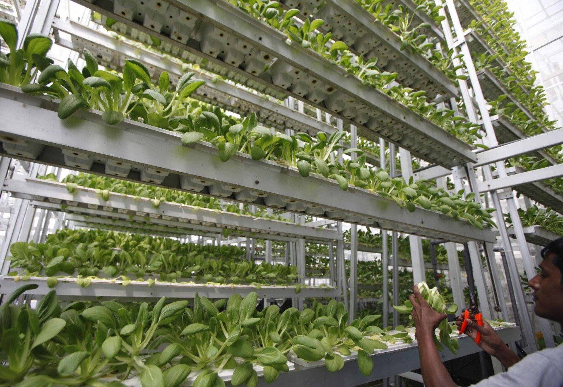 Singapore now has a commercial vertical farm
