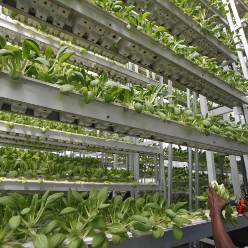 Singapore now has a commercial vertical farm