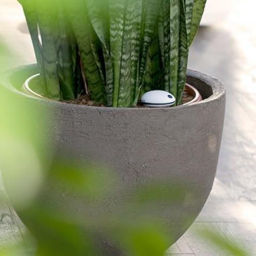 Koubachi Wi-Fi Plant Sensor