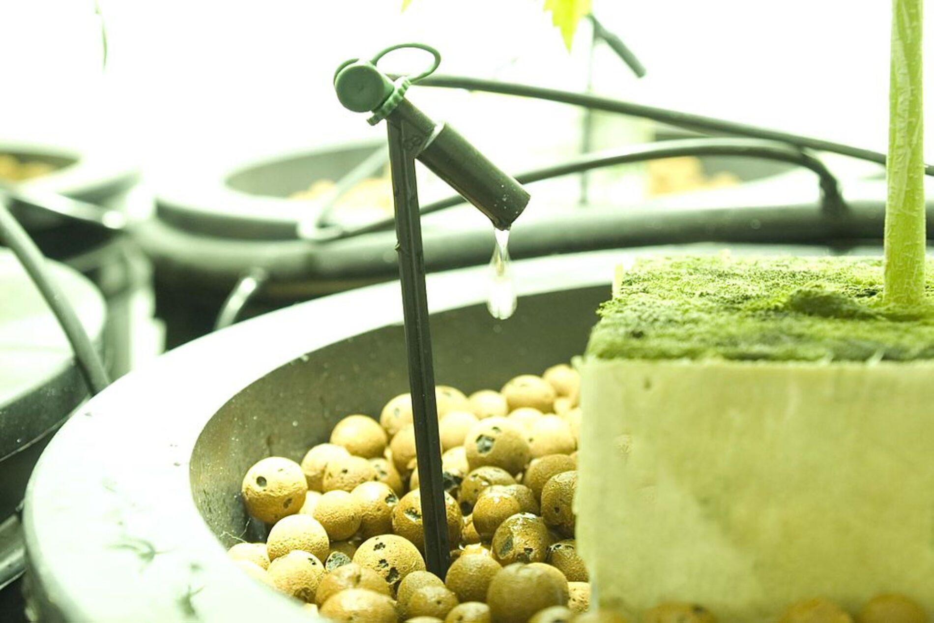 Εύκολος Τρόπος Ποτίσματος Φυτών Τομάτας