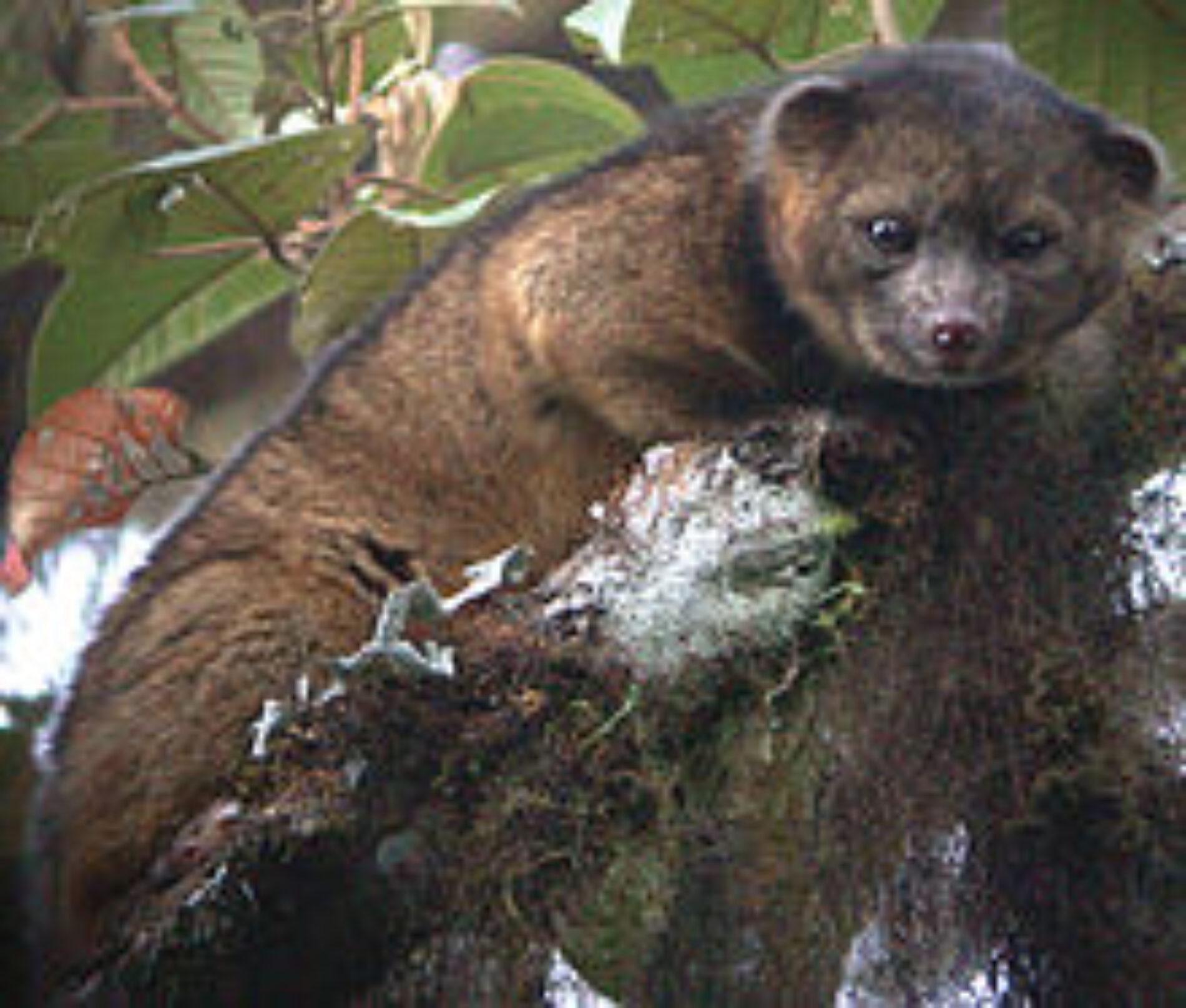 Ανακάλυψη νέου θηλαστικού από το Smithsonian Institute