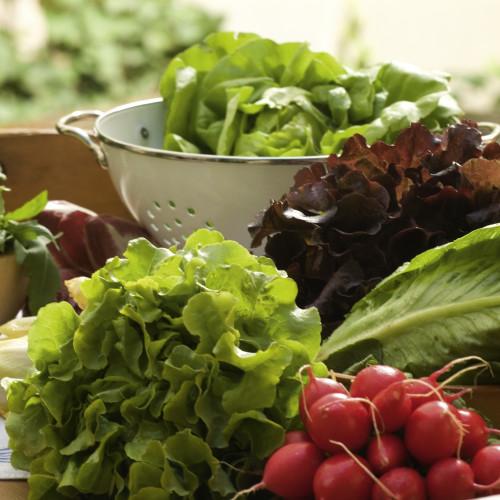 Οι εποχές των Φρούτων και των Λαχανικών