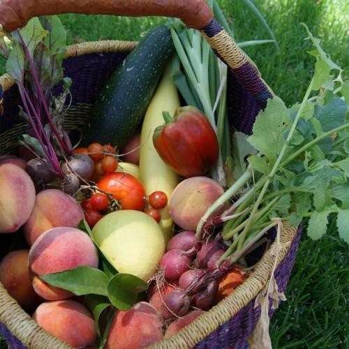 Δωρεάν εγχειρίδιο καλλιέργειας κηπευτικών ειδών για μικροκαλλιεργητές